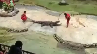 Messing up with Crocodile