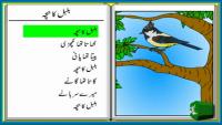 Bulbul Ka Bacha Urdu Poem For Kids