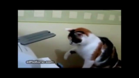 Cat Fighting With Printer