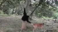 29 Monkeys In 38 Seconds
