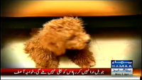 Tafteesh 7th April 2014 Monday at Samaa News TV
