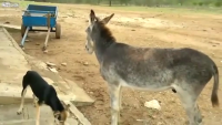 Donkey's Revenge - Must Watch