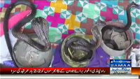 Tafteesh 28th April 2014 Monday at Samaa News TV