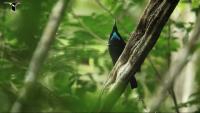 Beauitful Birds of Paradise