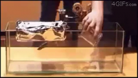 Play With Science - Amazing Video