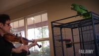 Parrot Hates Titanic Music