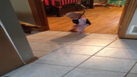 Dog Teaching Baby How To Jump