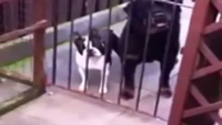 Dog Replies The Same Words