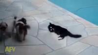 Cat Revenge Must Watch