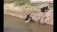 Funny Mokey Clips