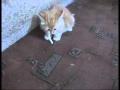 Smoker Cat