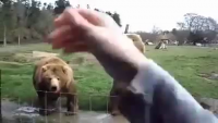 Two Bears Waving Hands
