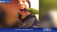 Dentist Parrot