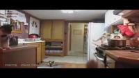 Cat Jump Fails