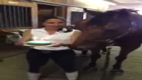 Have You Ever Seen A Horse Doing This Before
