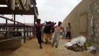 Jinnah Cattle Farm 2015 Cow Mandi