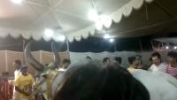 Chand Bull Sohrab Goth Gai Mandi Karachi 2K15