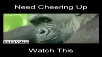 Funny Animal Dubs Must Watch