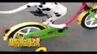 Dog ride bike