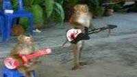 Monkey guitarist