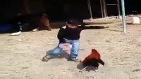 Fighting Between Cock vs Kid