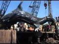 40-Feet Long Shark in Karachi Fish Harbour