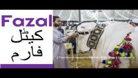 Fazal Cattle Farm 2016 Sohrab Goth Mandi