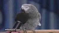 Talking Parrot Einstein