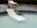 Ducks in a Pool