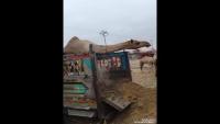 Camel Unloading In Camel Mandi Karachi 2017