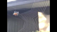 Check This Amazing Spider Web Construction