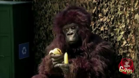 Hungry Gorilla Attack Prank