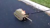 Fool Girl Makes Tank Dog
