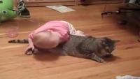 Tolerant cat