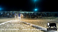 Sohrab Goath Maweshi Mandi Animal Competition 2012