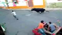 Power Full Bull