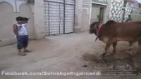 Awesome Japanese Bull