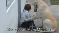 Dog Interacting With a Beautiful Child - Must Watch & Share