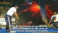 Guy Kisses 19 King Cobras