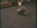 Cat Crawls into Glass Bowl