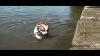 Dog Learns Physics The Hard Way