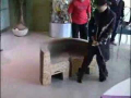 Unbelievable Chair, Chinese Rock!!!