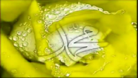 Shah-E-Madina - Alhaaj Khurshid Ahmad Naat